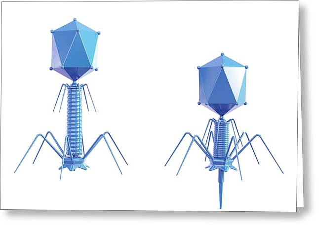 T4 Bacteriophage Greeting Card