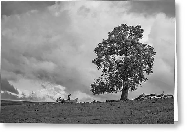 Table Mountain Oak Tree Greeting Card