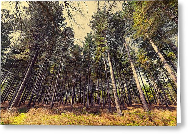 Tall Trees Greeting Card by Svetlana Sewell