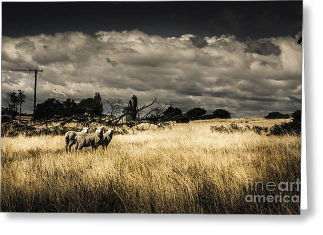 Tasmania Landscape Of An Outback Cattle Station Greeting Card by Jorgo Photography - Wall Art Gallery