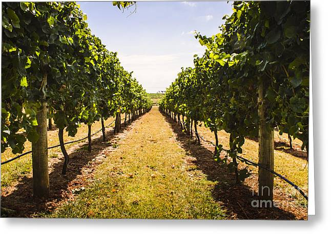 Tasmanian Vineyard Landscape. Australia Wines Greeting Card by Jorgo Photography - Wall Art Gallery