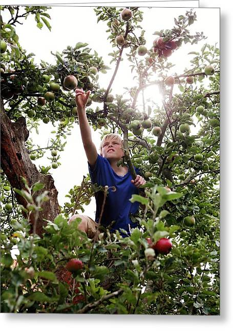 Teenage Boy Climbing An Apple Tree Greeting Card by Thomas Fredberg