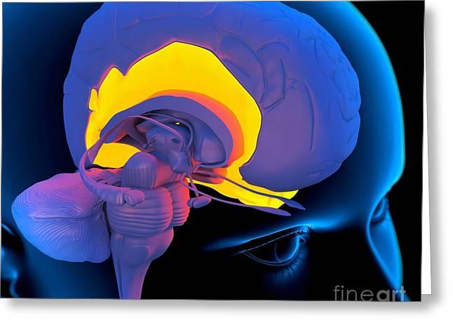 Temporal Lobe In The Brain, Artwork Greeting Card