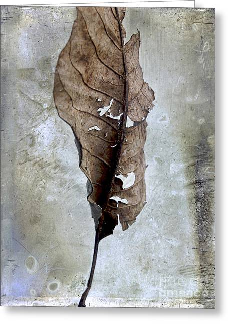 Textured Leaf Greeting Card by Bernard Jaubert