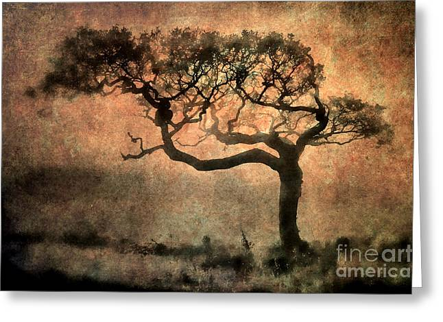 Textured Tree In The Mist Greeting Card by Ray Pritchard