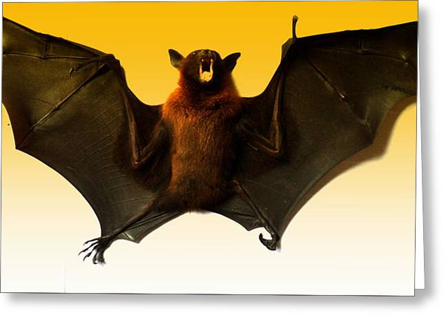 The Bat Greeting Card