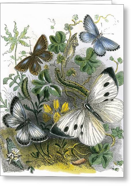 The Butterfly Vivarium Greeting Card