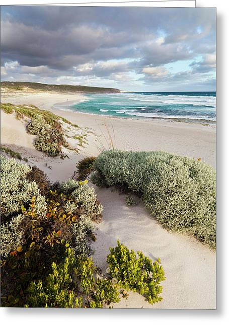 The Coastline At Hanson Bay On Kangaroo Greeting Card by Martin Zwick