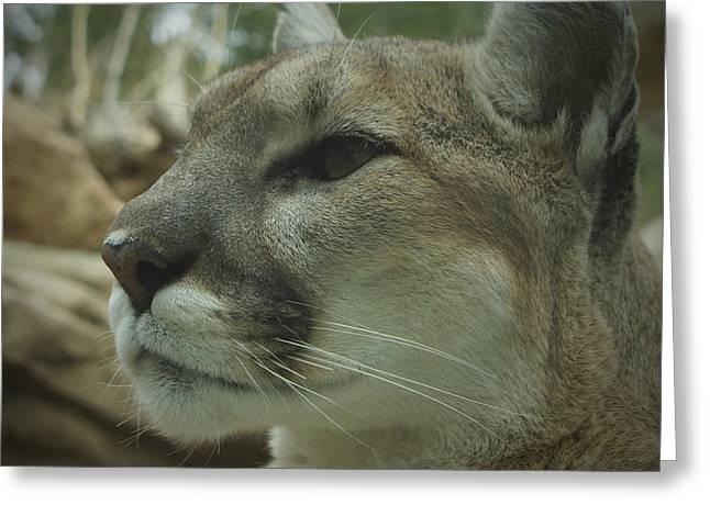 The Cougar 3 Greeting Card by Ernie Echols