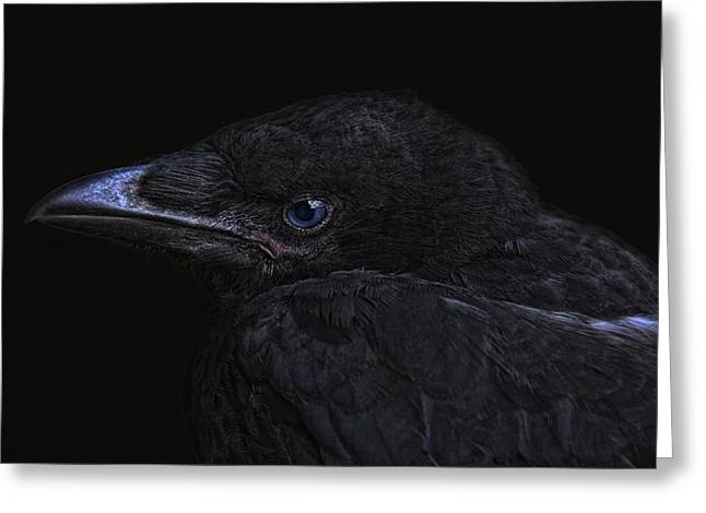The Crow Greeting Card by Joachim G Pinkawa