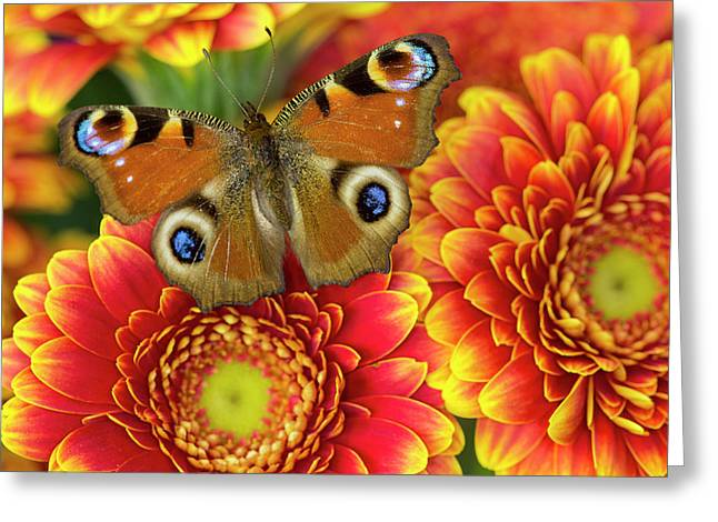 The European Peacock Butterfly, Inachis Greeting Card