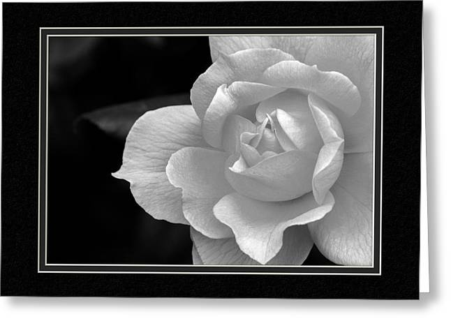 The Exquisiteness Of A Rose  Greeting Card