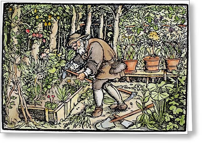 The Gardener, 1550 Greeting Card