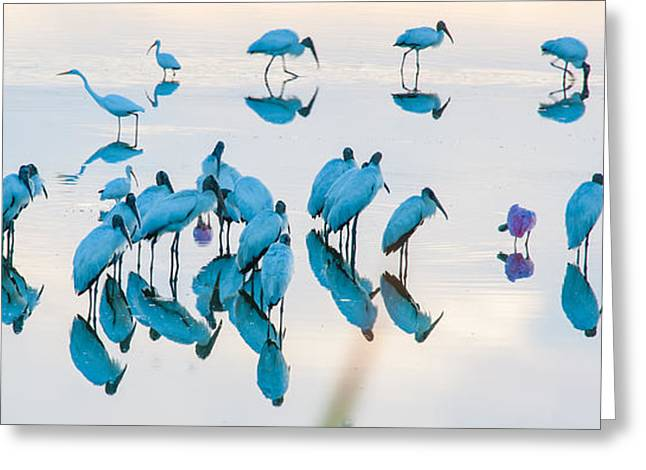 The Gathering Bunch Greeting Card by Cliff C Morris Jr