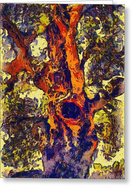 The Hole Tree Santa Margarita Lake Greeting Card by Barbara Snyder