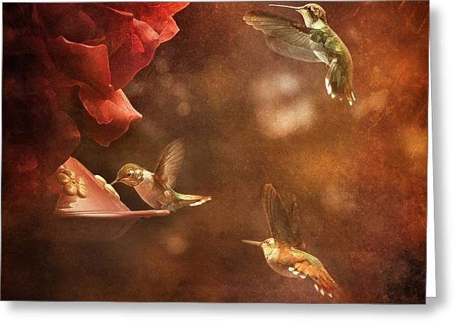 The Hummingbird Feeder Greeting Card by Cindy Singleton