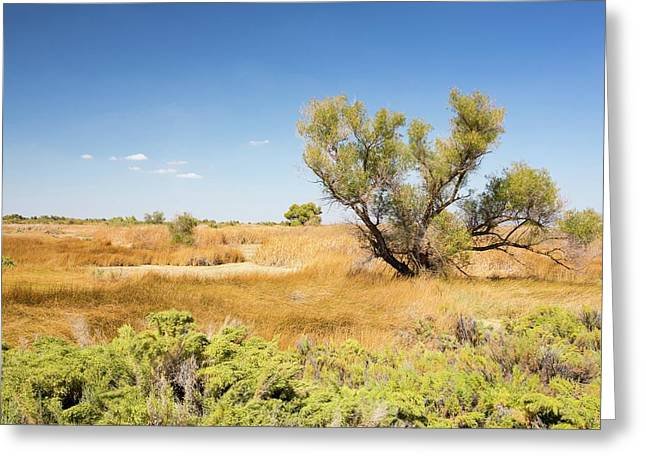 The Kern Valley Wildlife Refuge Greeting Card