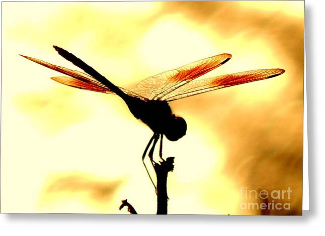 The Light Of Flight Upon The Mosquito Hawk At The Mississippi River In New Orleans Louisiana Greeting Card