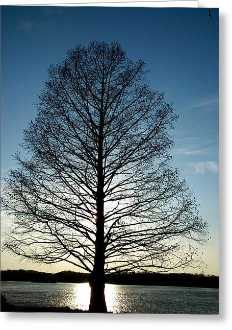 The Lonely Tree Greeting Card by Lucy D