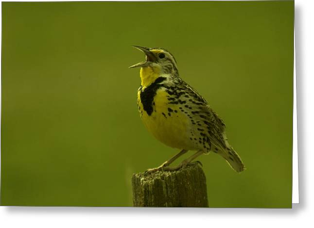 The Meadowlark Sings Greeting Card by Jeff Swan