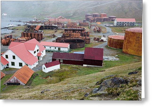 The Old Whaling Station At Grytviken Greeting Card by Ashley Cooper