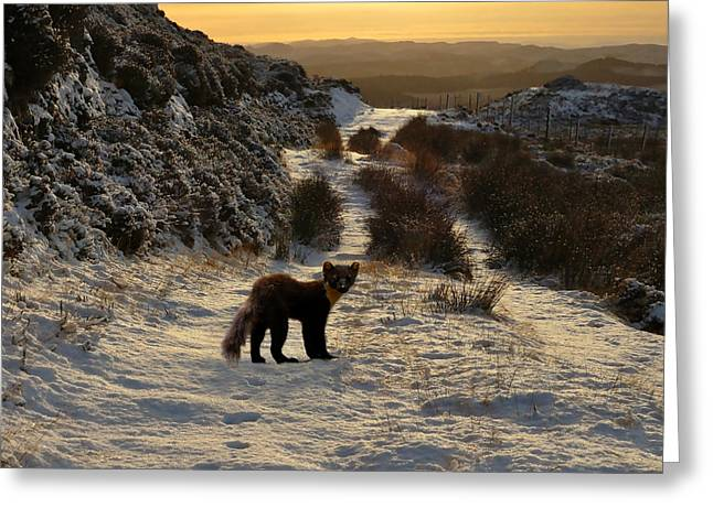 The Pine Marten's Path Greeting Card