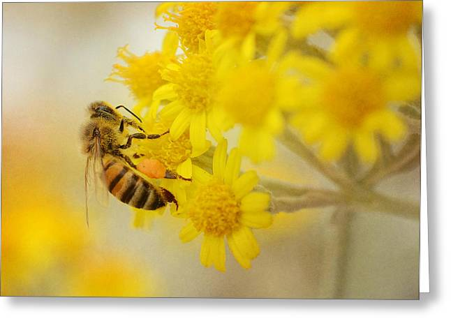 The Pollinator 2 Greeting Card