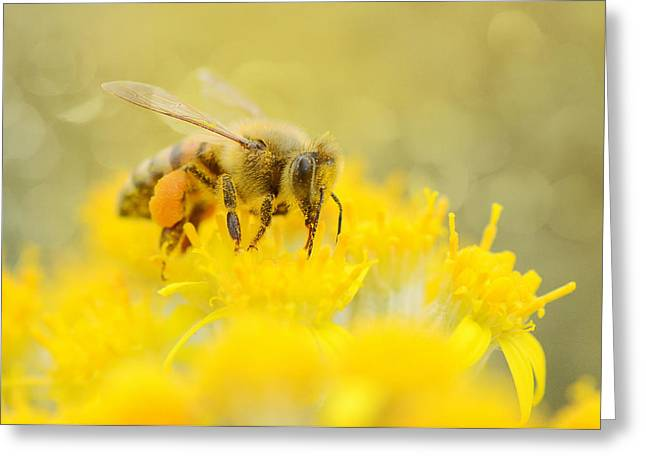 The Pollinator Greeting Card