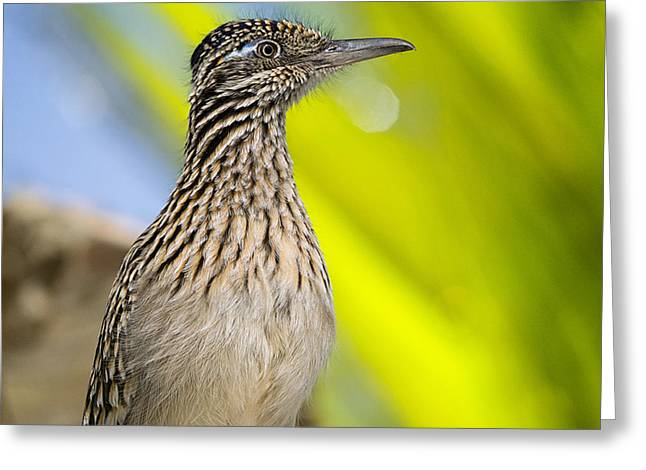 The Roadrunner  Greeting Card by Saija  Lehtonen