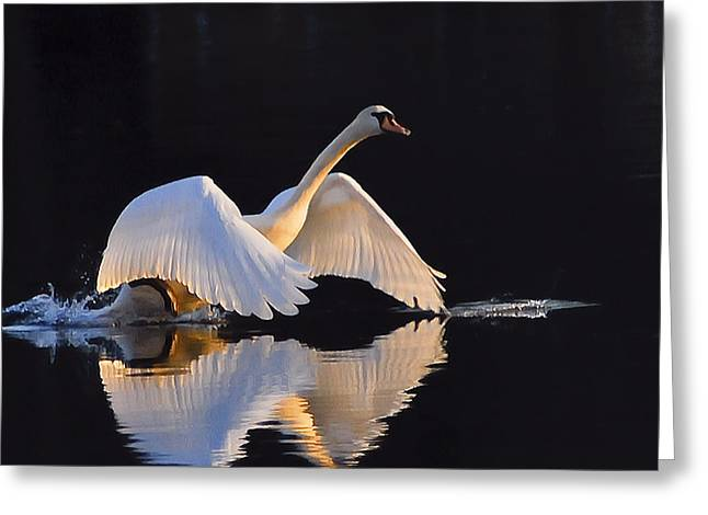 The Swan Of Zoar Greeting Card