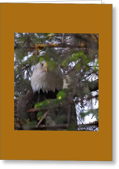 Greeting Card featuring the photograph The Watcher by Cynthia Lagoudakis