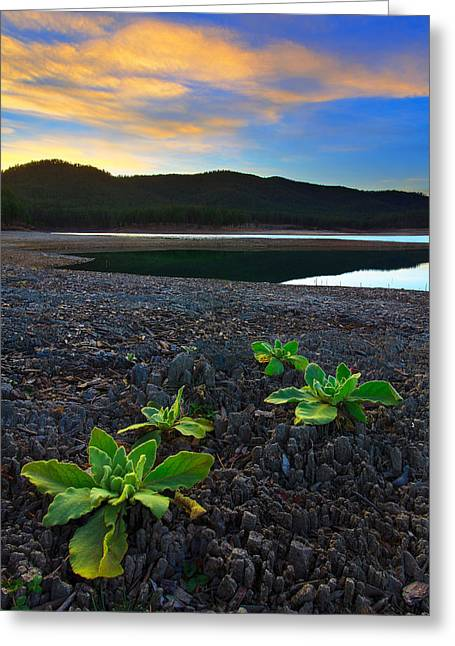 Greeting Card featuring the photograph The Way Of Life by Kadek Susanto