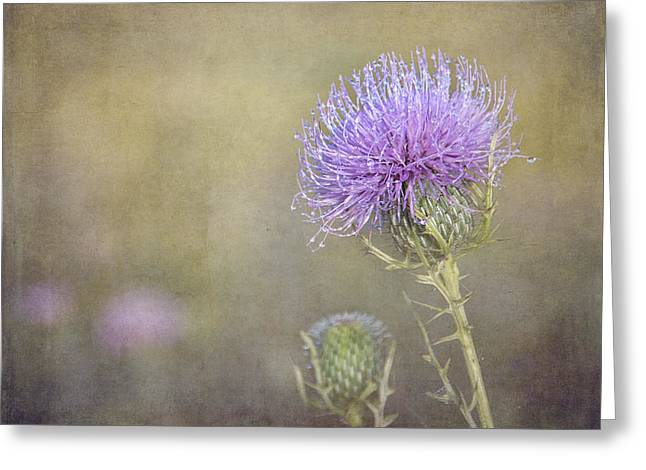 Thistle Greeting Card by Carol Erikson