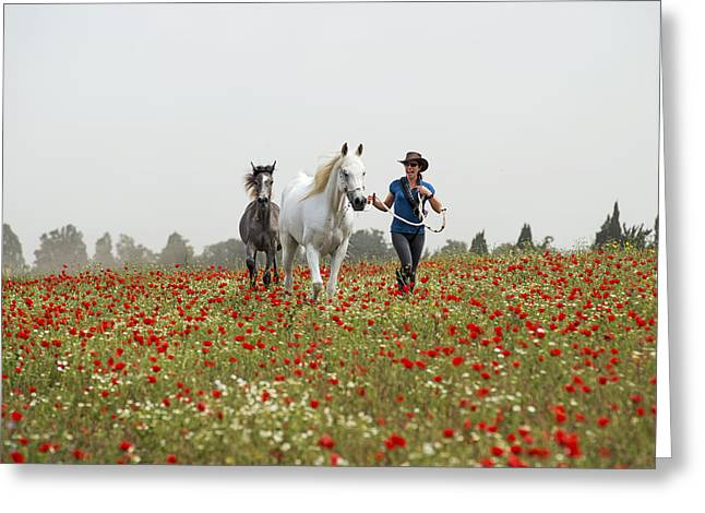 Three At The Poppies' Field... 3 Greeting Card