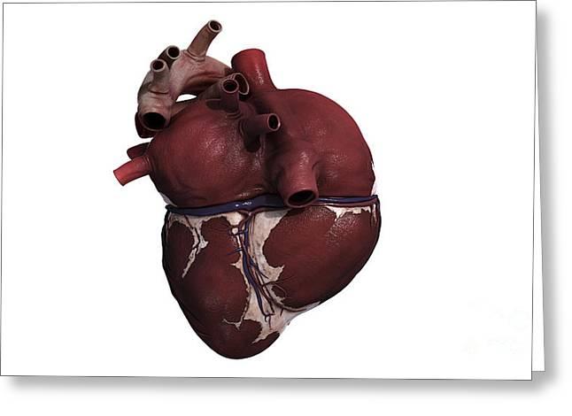 Three Dimensional View Of Human Heart Greeting Card