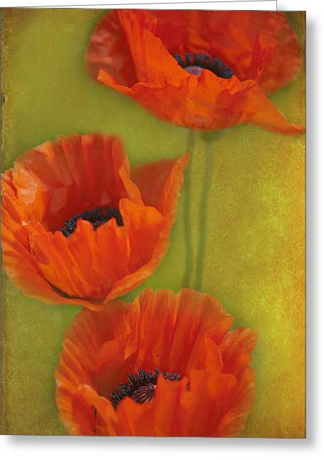 Three Poppies Greeting Card