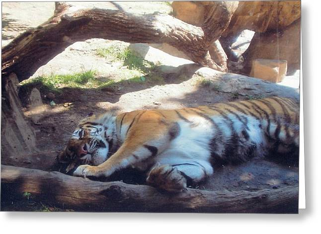Tiger At Rest Greeting Card by Barb Baker