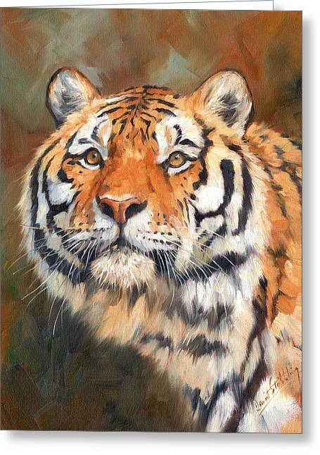 Tiger Look Greeting Card by David Stribbling