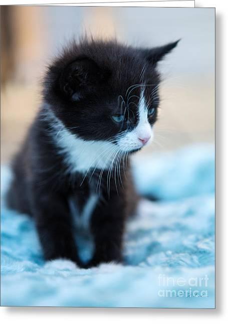 Tired Kitten Greeting Card by Iris Richardson