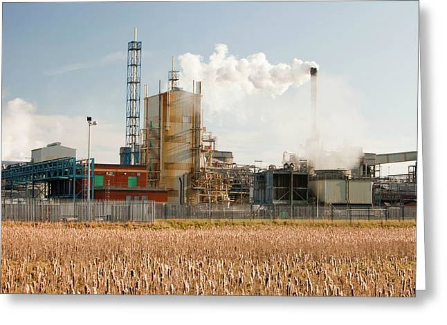 Titanium Dioxide Plant Greeting Card by Ashley Cooper