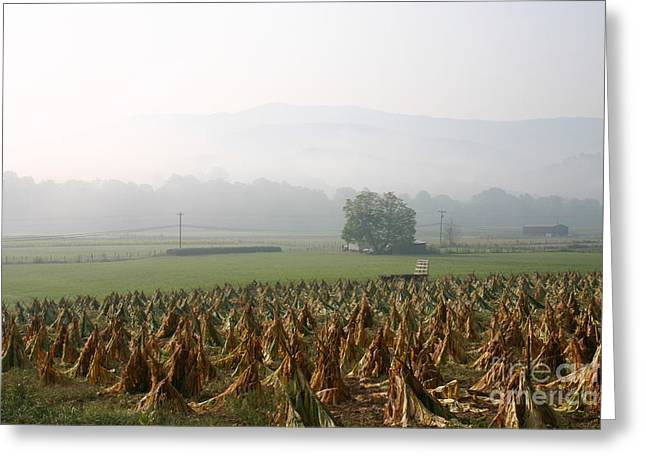 Tobacco In The Field Greeting Card