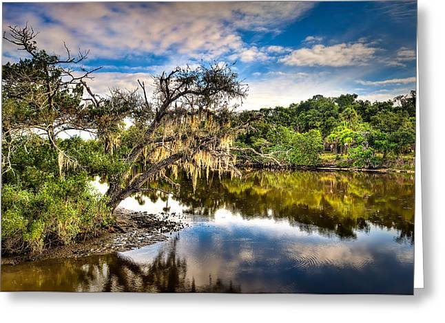 Tomoka Oaks Greeting Card by Brent Craft