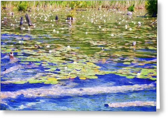 Torch River Water Lilies Greeting Card by Michelle Calkins
