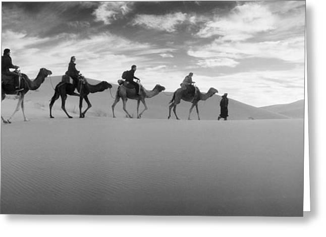 Tourists Riding Camels Greeting Card by Panoramic Images