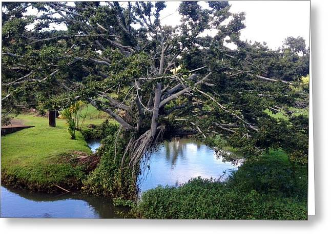 Tree Greeting Card by Alohi Fujimoto