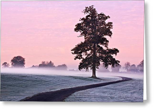 Tree At Dawn / Maynooth Greeting Card