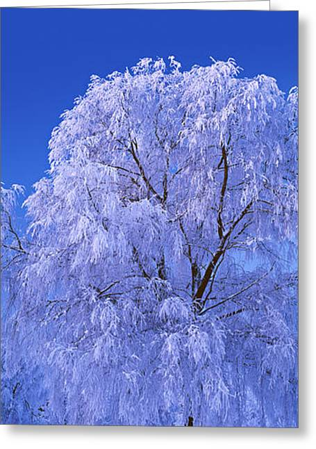Tree Covered With Snow, Imatra, South Greeting Card by Panoramic Images