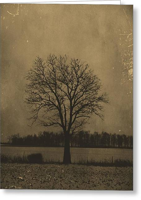 Tree Of Life Greeting Card by Dan Sproul