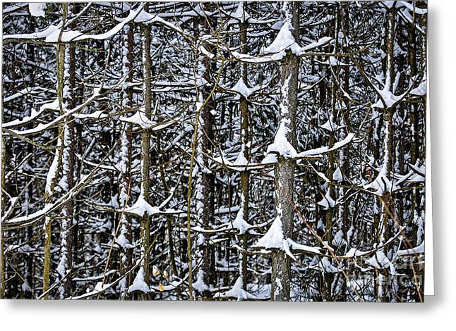 Tree Trunks In Winter Greeting Card