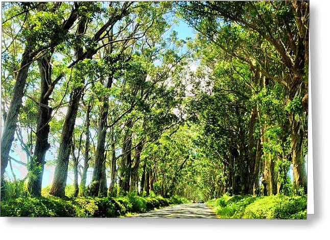 Tree Tunnel Greeting Card by Lannie Boesiger